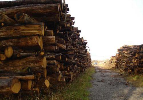 pile de bois pour faire de la plaquette forestière